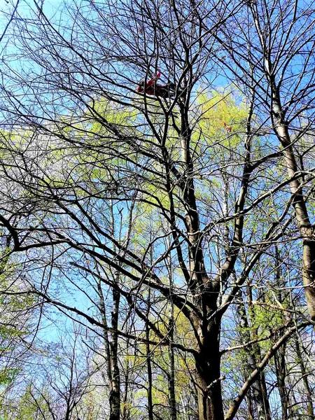 Popeo se na 15 metara visoko drvo, spašavao ga HGSS Karlovac
